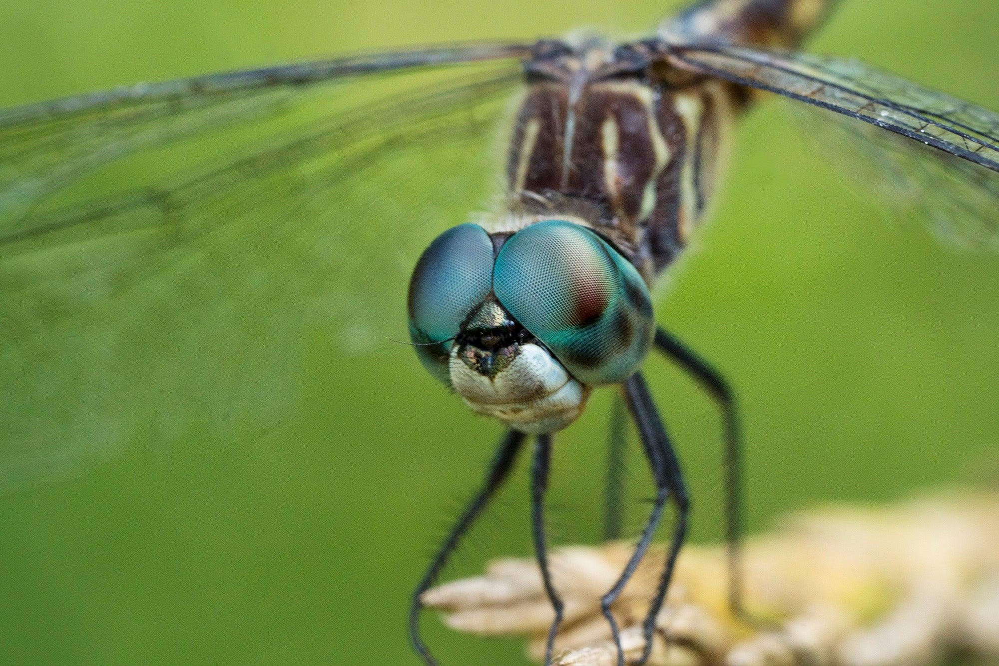 Alpha-Universe-Alpha-Female-Plus-Dragonfly-By-Sandee-Lim.jpg