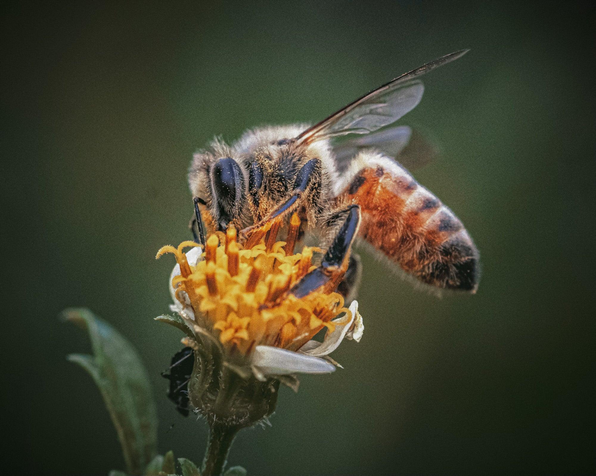 Alpha-Universe-Alpha-Female-Plus-ProtectingPollinators-HoneyBee-HMather-2.JPG