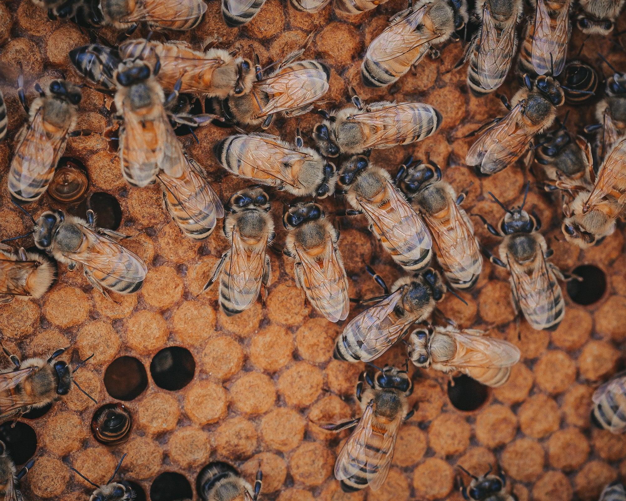 Alpha-Universe-Alpha-Female-Plus-ProtectingPollinators-HoneyBee-HMather-6.JPG