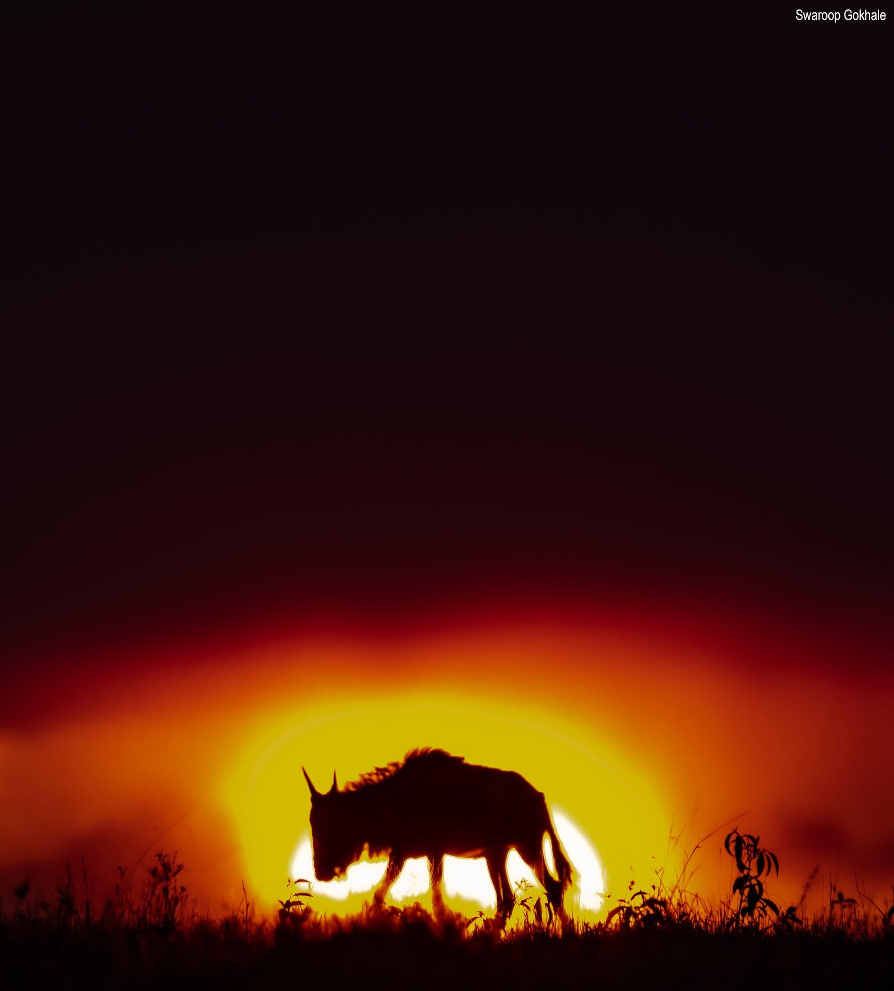 Alpha-Universe-BTS-Swaroop-Gokhale-Wildebeest.jpg
