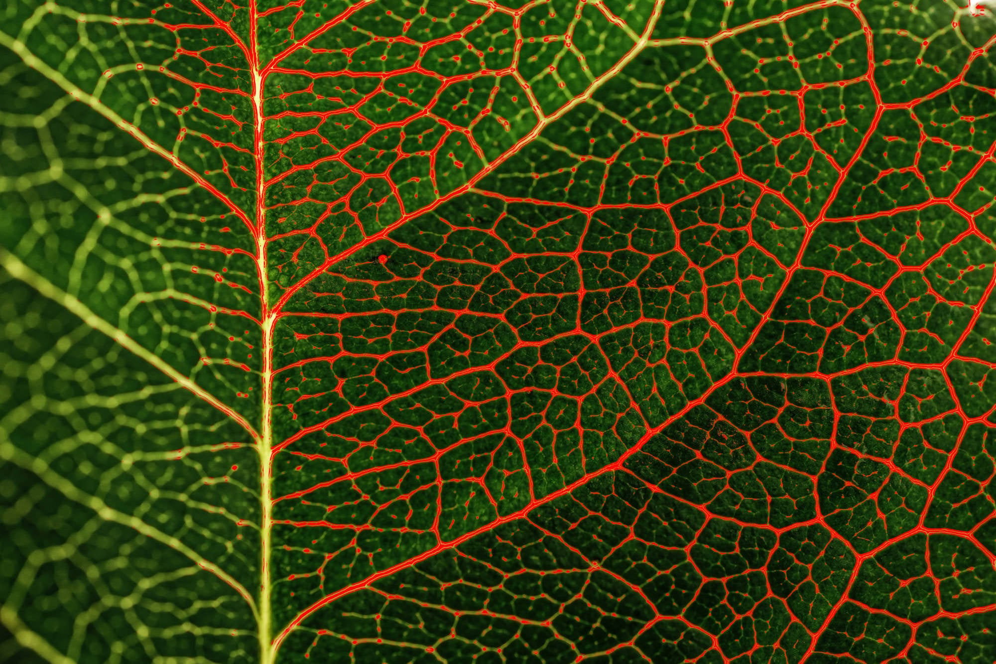 Alpha-Universe-Caroline-Jensen-Macro-focus-peaking-leaf.jpg
