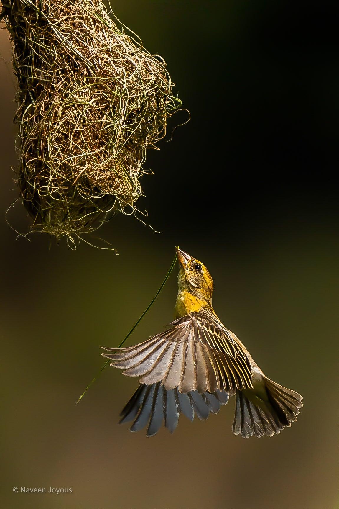 Alpha-Universe-DiscoverWithAlpha-Naveen-Joyous-Bird.JPG
