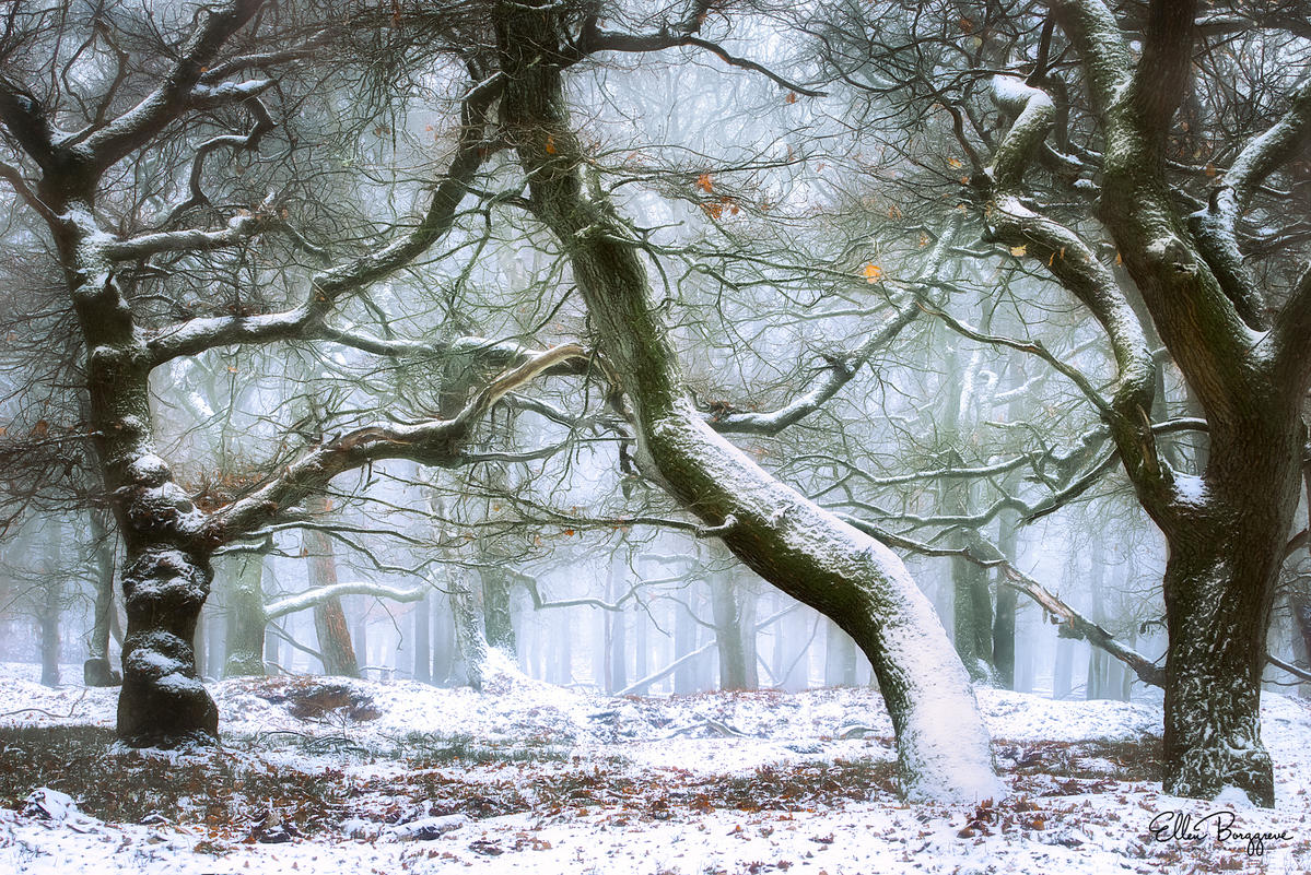 10 Tips For Dreamy Forest Photos