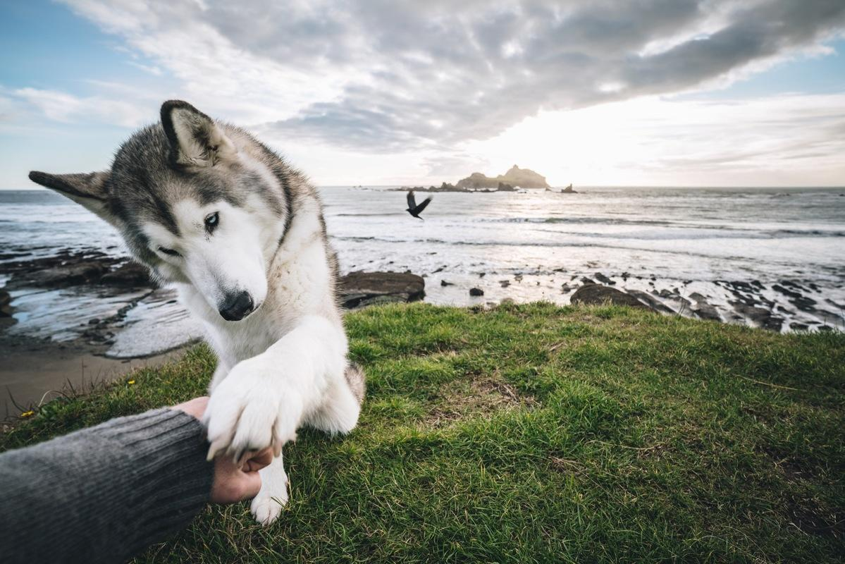Show Me A Calendar >> The Rise Of Loki The Wolfdog And His 1.8 Million Instagram ...