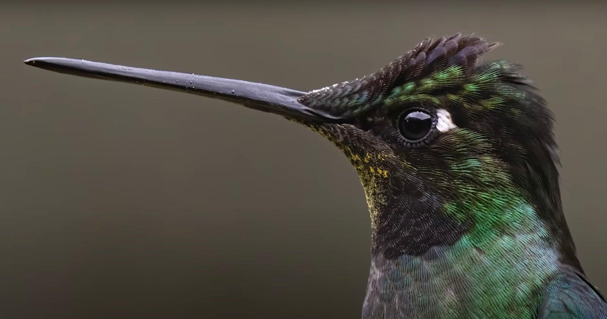 Alpha-Universe-Mark-Smith-Costa-Rica-Birds-Hummingbird-Zoom.jpg