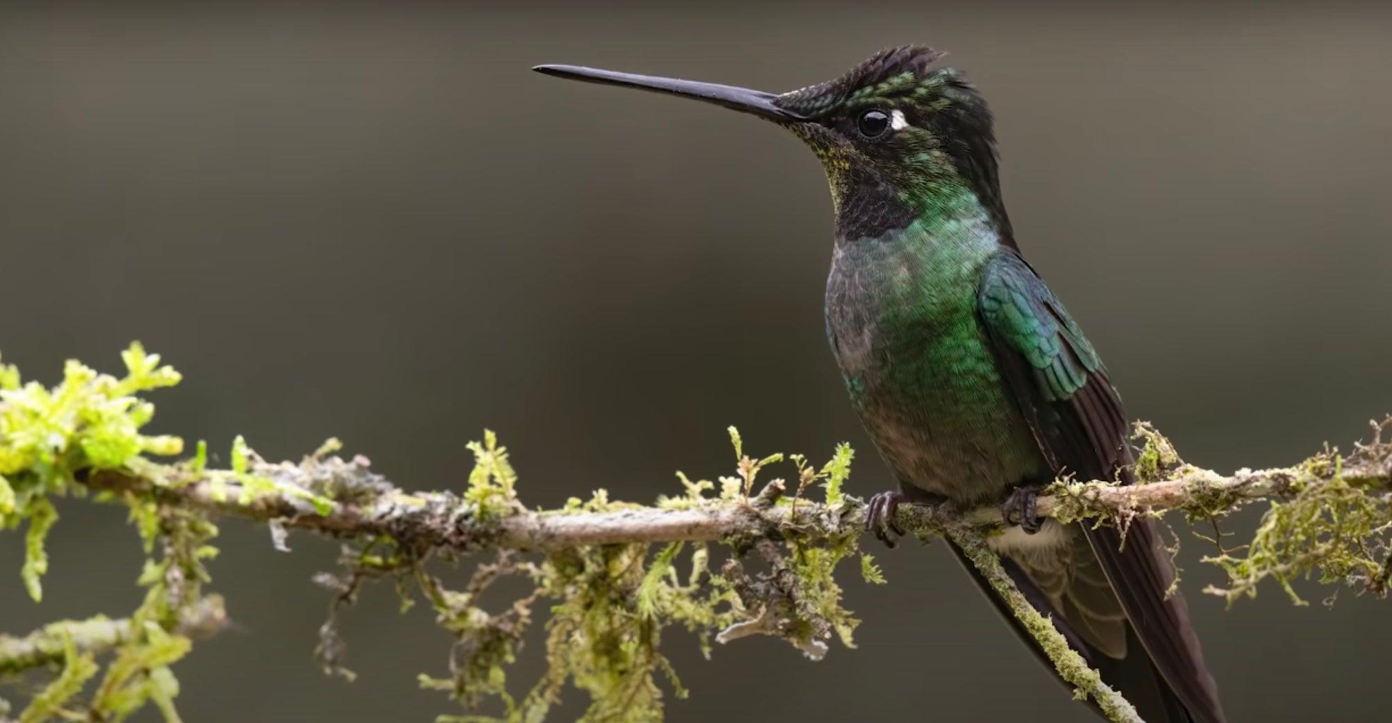 Alpha-Universe-Mark-Smith-Costa-Rica-Birds-Hummingbird.jpg