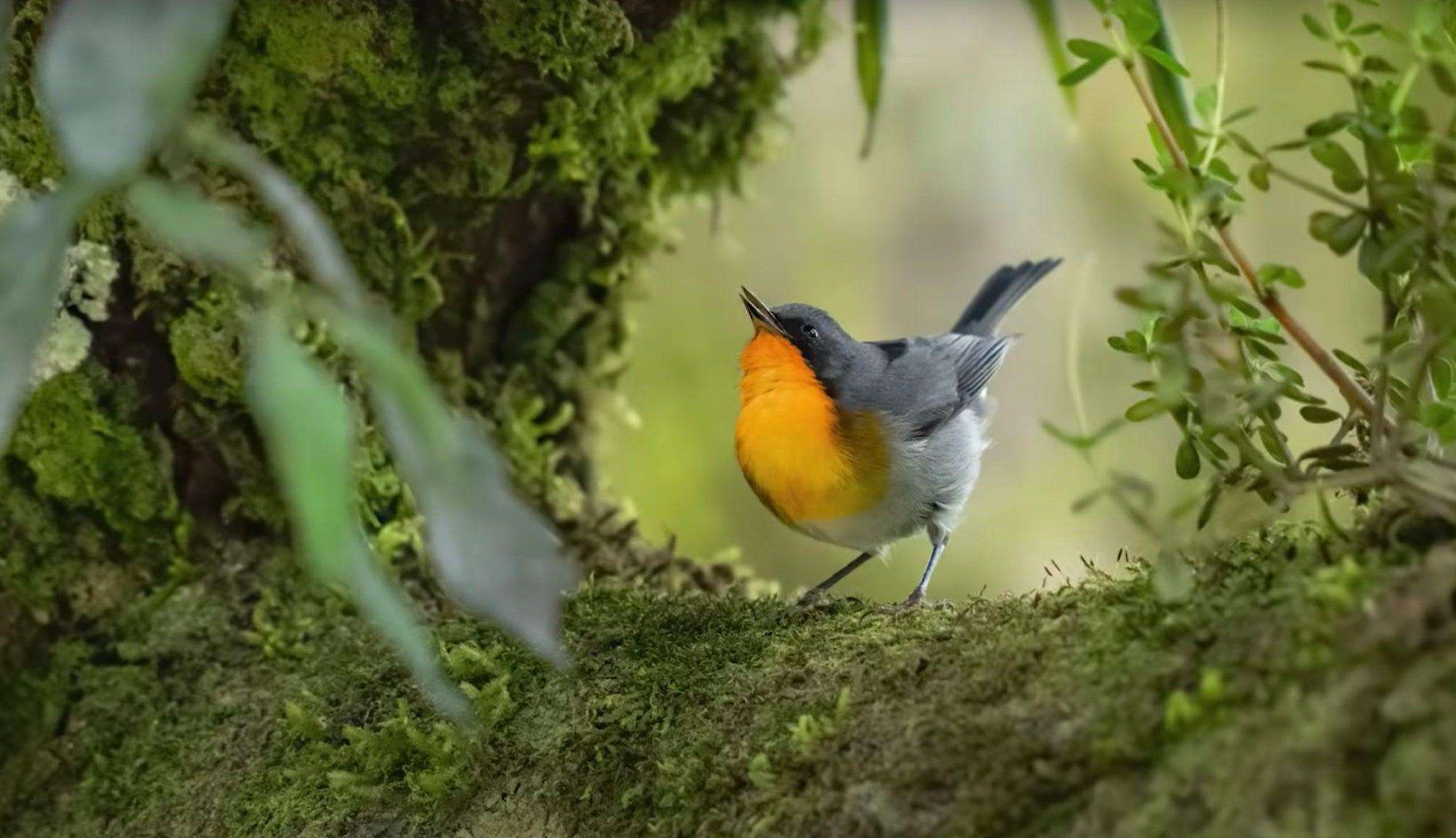 Alpha-Universe-Mark-Smith-Costa-Rica-Birds-Warbler.jpg