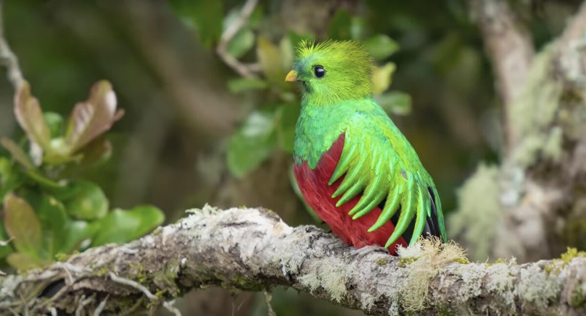 Take A Virtual Bird Photography Trip To Costa Rica With The Sony α7R IV α9