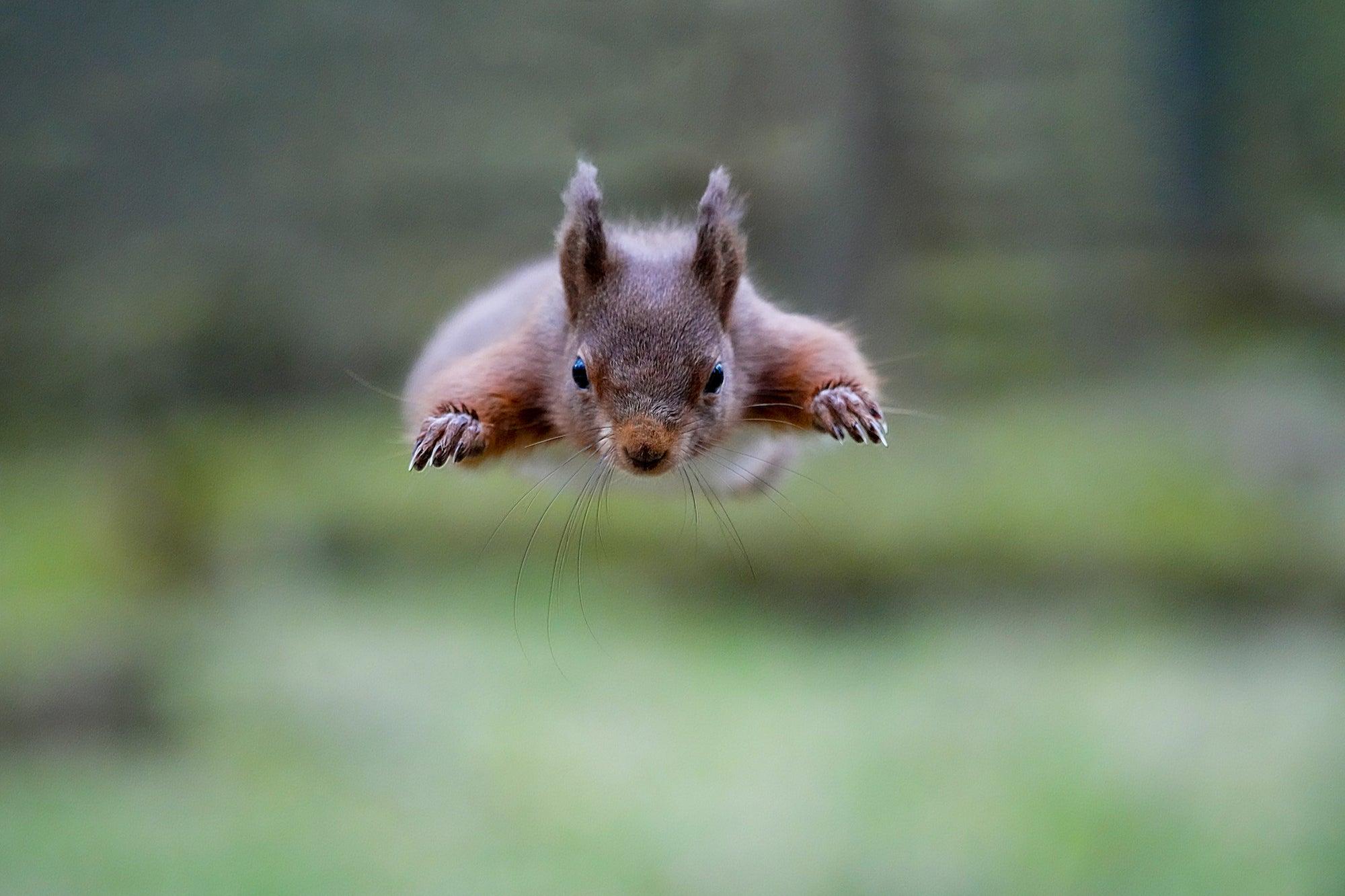 Alpha-Universe-POTD-Red-Squirrel-Bob-Riach-1.jpg
