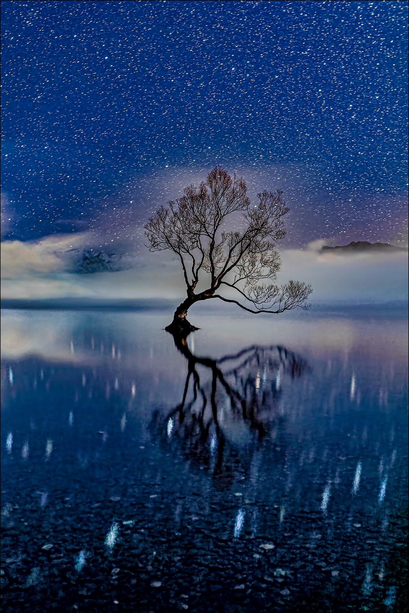 Alpha-Universe-Photo-by-Gary-Hart--Wanaka-Tree-Stars.Sk78N3u1L.jpg