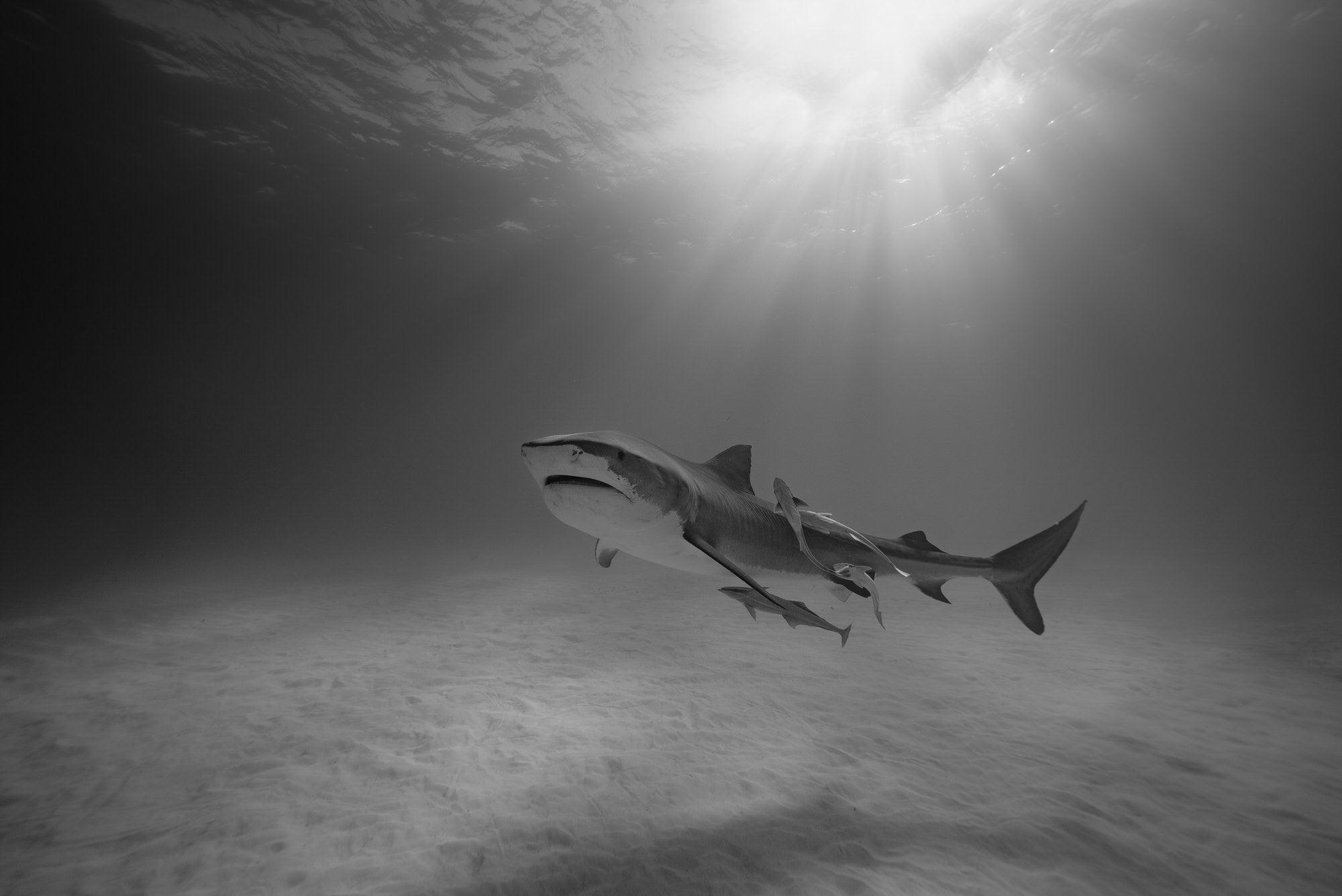 Alpha-Universe-SeaLegacy-Photo-by-Paul-Nicklen-DSC06440_3000LE.jpg