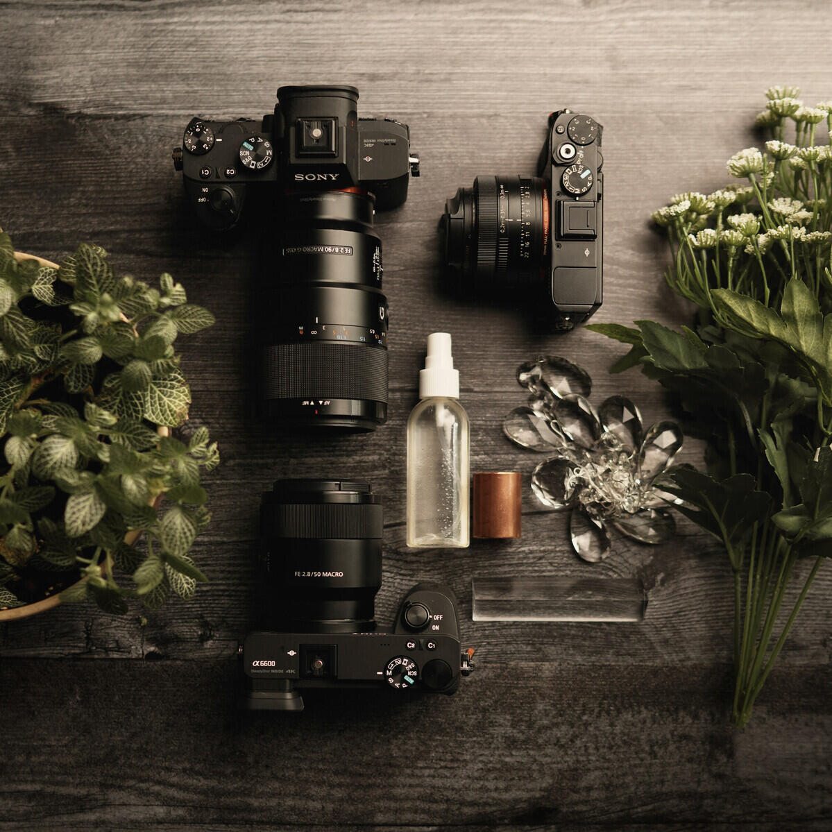 What's In My Bag: Caroline Jensen's Camera Lens Combinations For Macro Therapy In The Age Of Social Distancing