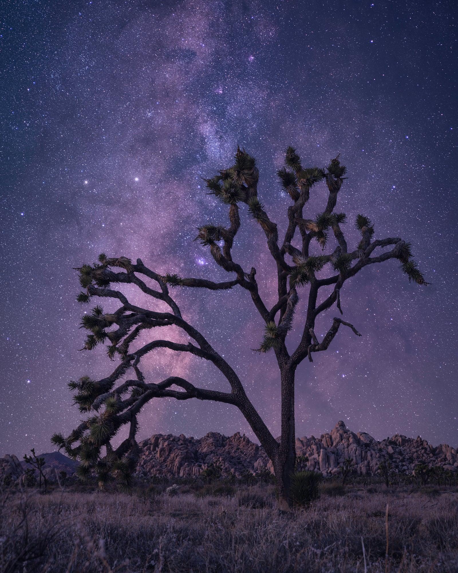 Alpha-Universe-WIMB-Jess-Santos-Astro-24-70mm.jpg