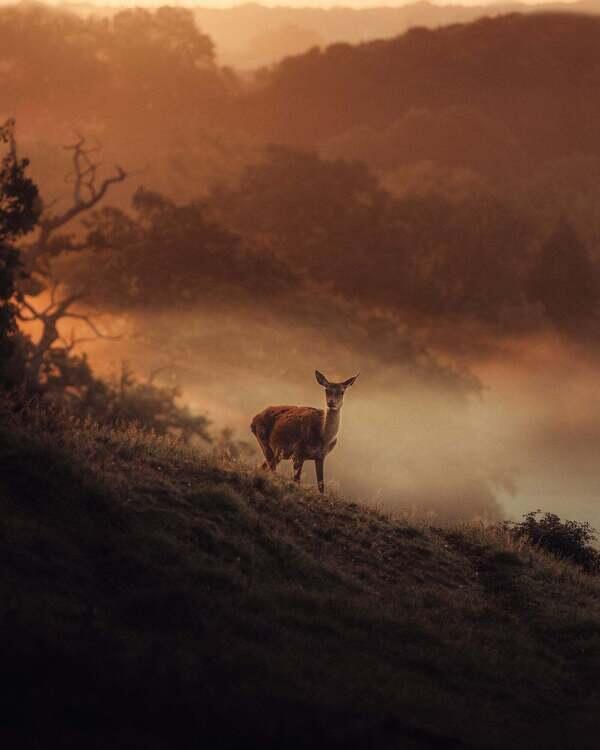 Alpha-Universe-photo-by-Gareth-Llewellyn-instagram-withgar-red-deer.jpg