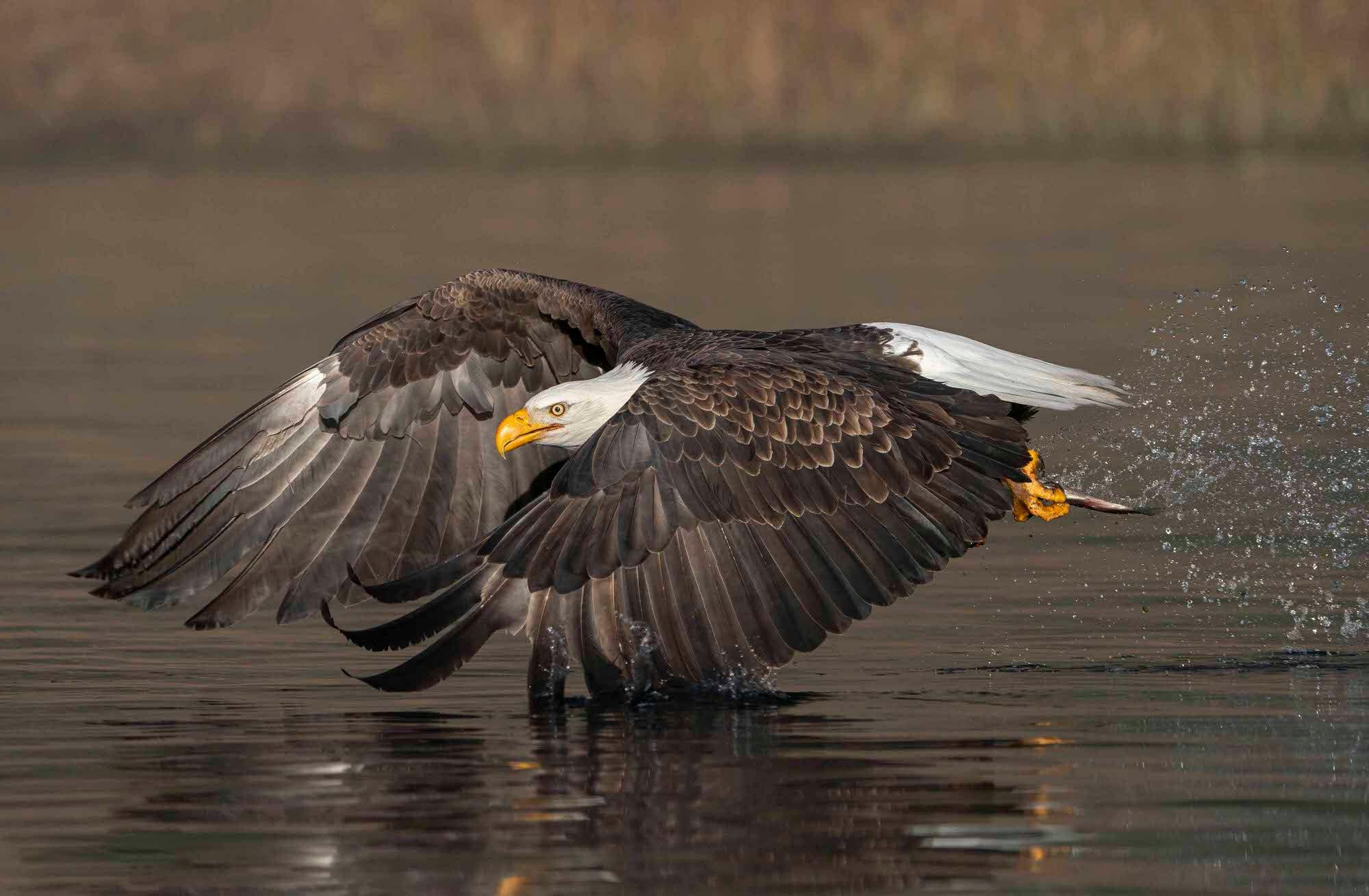 Alpha-Universe-photo-by-Martha-A-Hidalgo-eaglefishing.jpg