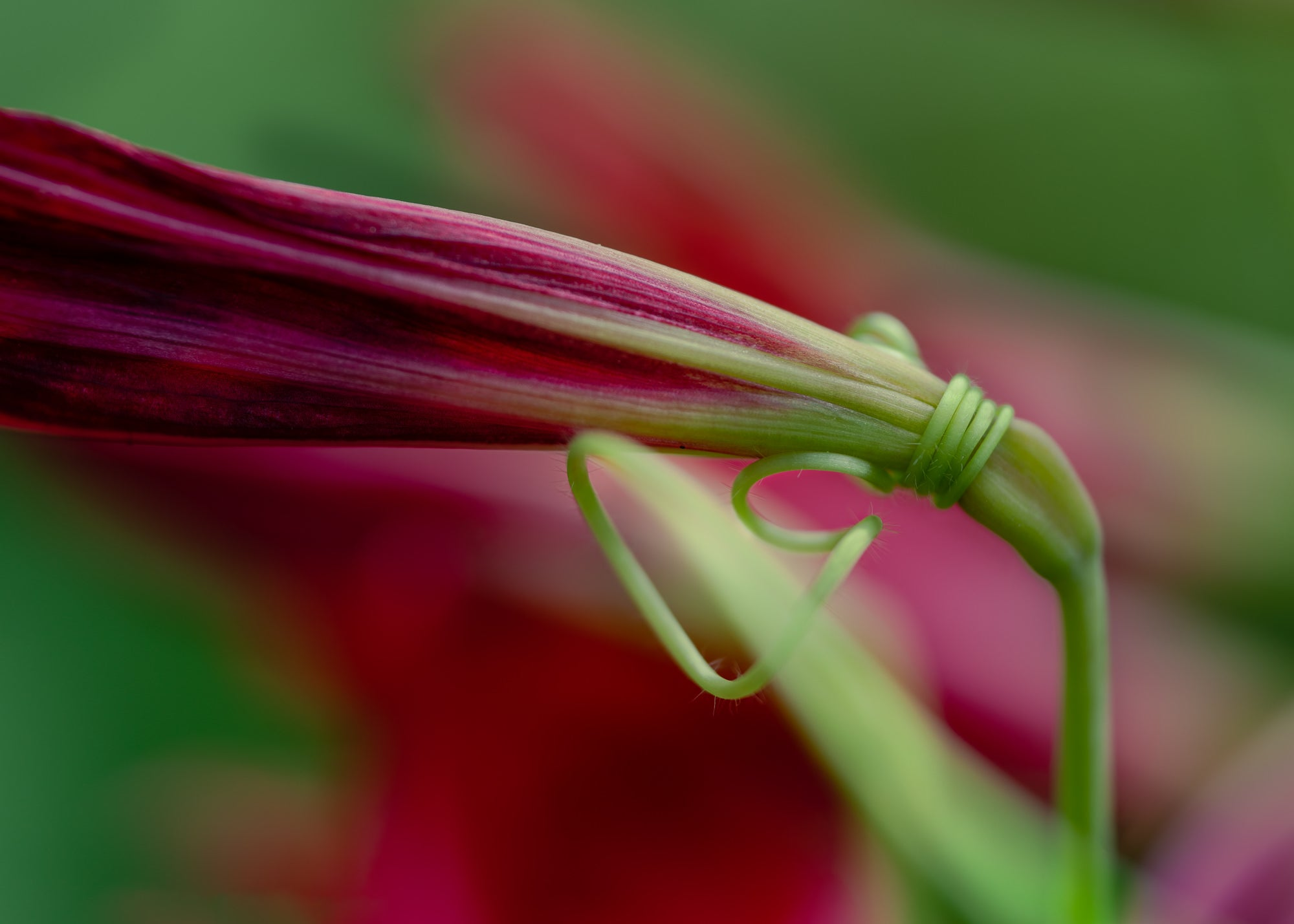 Alpha-Universe-photo-by-Mika-Geiger-Entwined-Macro-Contest-WInner.jpg