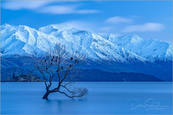 Don-Smith-Lone-Willow-in-Lake-Wanaka-Edit-copy-copy-copy.jpg