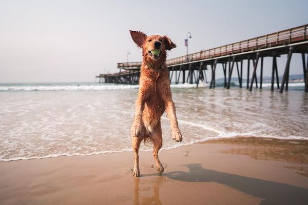 Pismo-Beach-Pier-Eric-Rubens-DSC9220.jpg