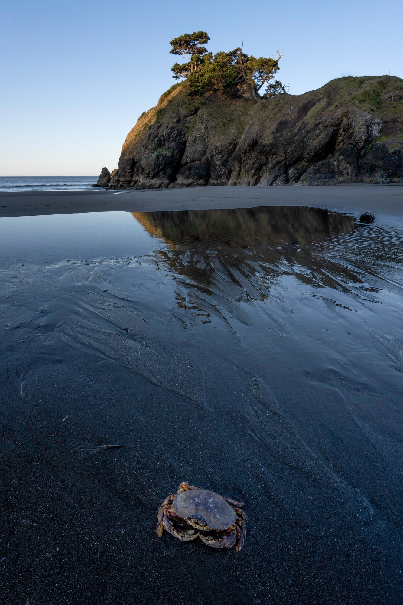 Sony-Alpha-Universe-Photo-by-Don-Smith-14mm-GM-Crab-on-Beach-at-Low-Tide-2.jpeg