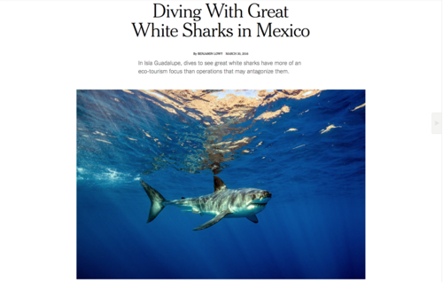 The Sharks Of Isla Guadalupe